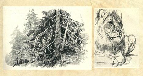 Зарисовки и наброски природы и животных.
