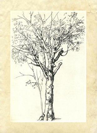 Статья. Рисунок, живопись, композиция пейзажа. Картинка. Картина. Дерево. Леонардо да Винчи. Перо.